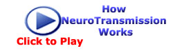 How NeuroTransmission Works