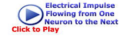 Electrical Impulse Flowing from One Neuron to the Next